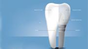 Dental Anatomy Illustration Services