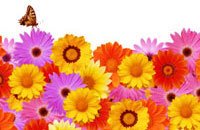 color variation image